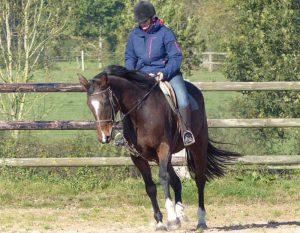 cours d'équitation perfectionnement individuel. Cours d'équitation individuel