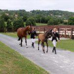 Ecurie les Grainvilleries : concours cheval élevage. Jument suitée