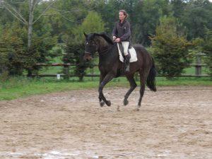 Ecurie Grainvilleries travail et préparation cheval propriétaire