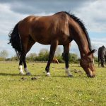 Ecurie les Grainvilleries : pension pour chevaux au pré ou boxe