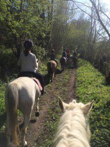 Ecurie les Grainvilleries : promenade à cheval campagne normande